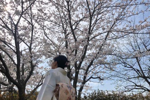 7分咲きの桜の樹の下で